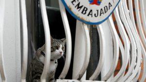 Unkempt, Heavily-Bearded Julian Assange No Longer Has Embassy Cat For Company (thedailybeast.com)