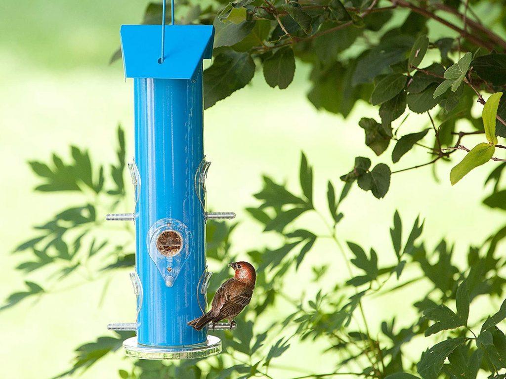 The 10 best bird feeders in 2021 (businessinsider.com)