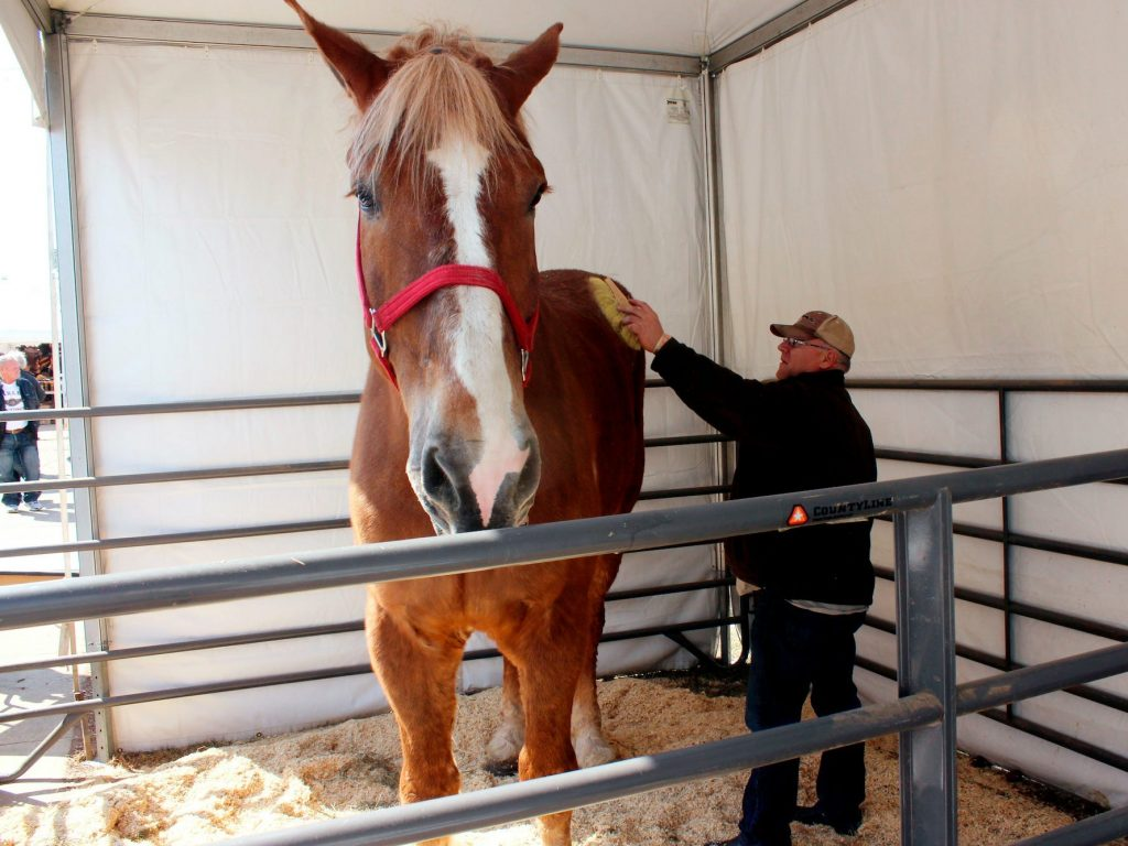 Big Jake, tallest horse in the world and a 'big jokester,' dies in Wisconsin (businessinsider.com)